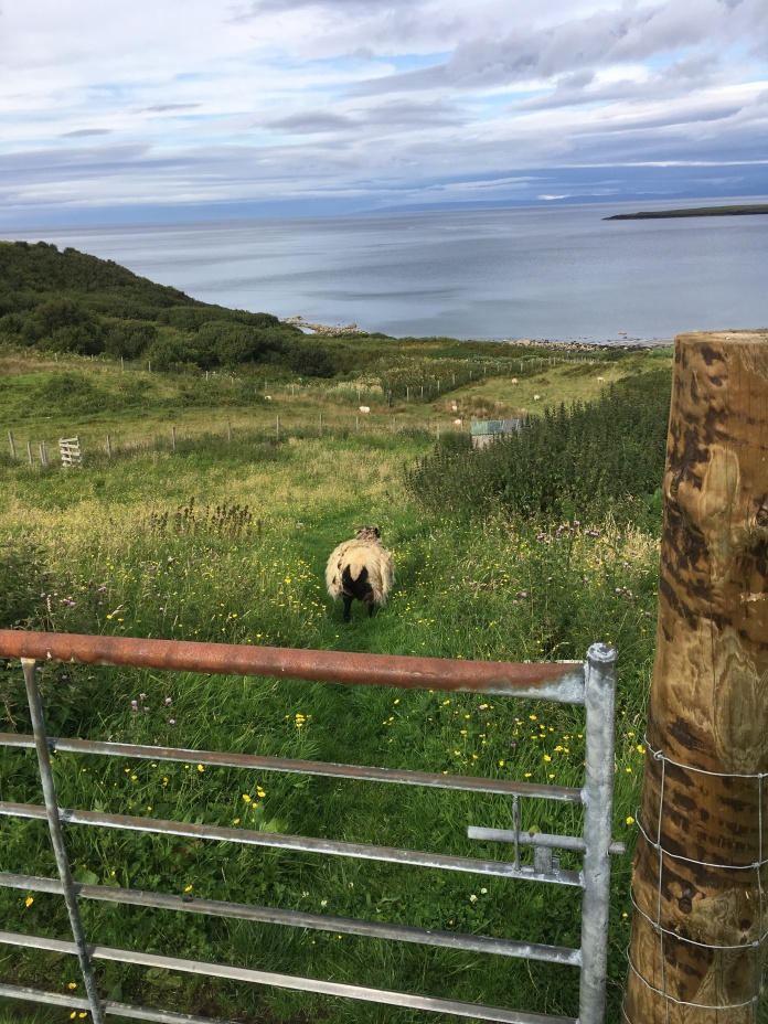 Skye Weavers 19